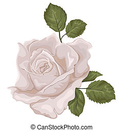Beautiful isolated rose on the white background. Flower pastel