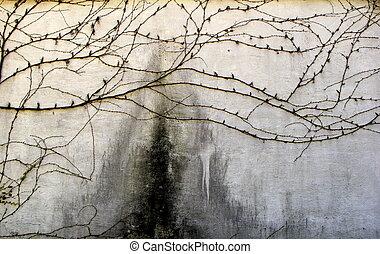 Beautiful ivy creeping across wall