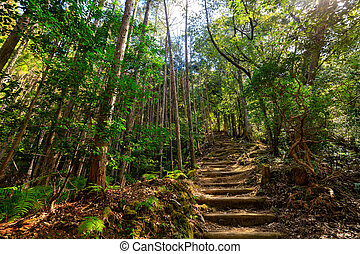 Beautiful Japanese forest