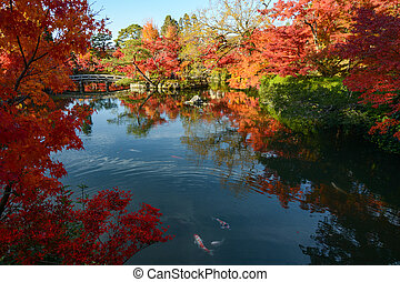 Japanese pond garden with autumn maple tree reflections and colorful fish