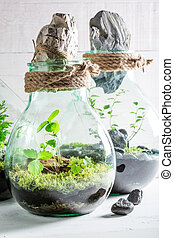 Beautiful jar with piece of forest with self ecosystem