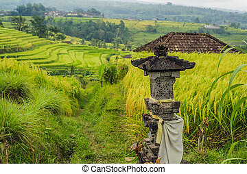 Beautiful Jatiluwih Rice Terraces against the background of ...
