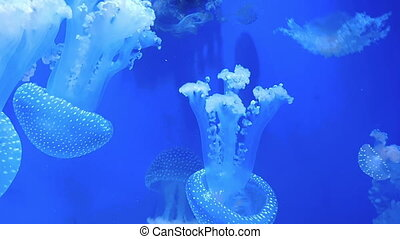 Beautiful jellyfish float in blue water