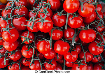 Beautiful juicy tomatoes on the branches close