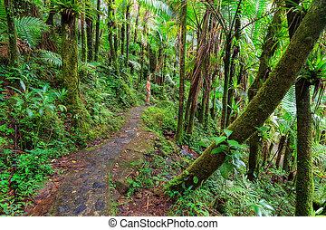 Beautiful jungle path