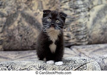 Beautiful kitten sitting on the couch