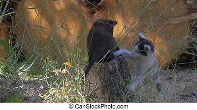 Beautiful kittens - 4K, Beautiful and sweet kittens, playing...