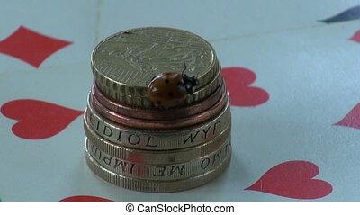 ladybug ladybird on money coins