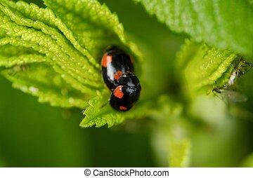 Beautiful ladybug on a green leaf view