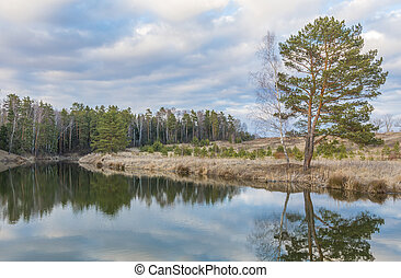 beautiful lake in front of a pine forest