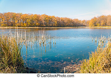 Beautiful lake in the autumn forest against blue sky