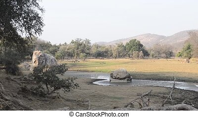 beautiful lake in the Ranthambore National Park, India