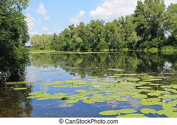 Beautiful lake on summer