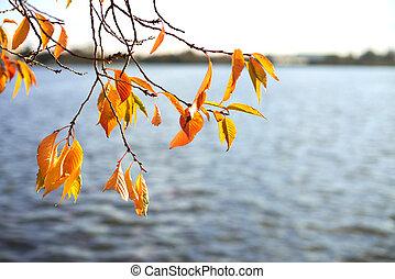 Beautiful lake seen through autumn branches