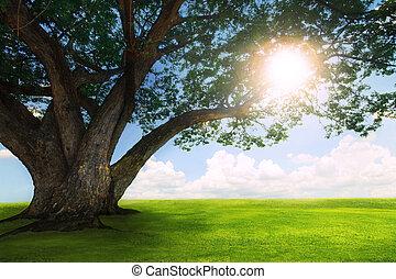 beautiful land scape of big rain tree plant on green grass ...