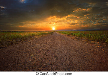 beautiful land scape of dusty road perspective to sun set ...
