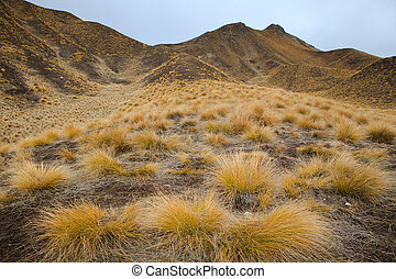 beautiful land scape of grass tufts mountain in waitaki...