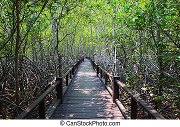 beautiful land scape of wood way bridge in natural mangrove...