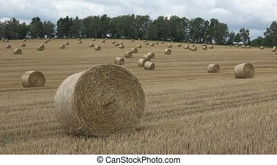 Beautiful landscape. Agricultural field. Round bundles straw...