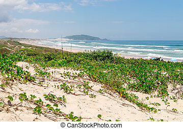 Beautiful landscape at the Campeche beach in Florianopolis, Santa Catarina, Brazil. One of the main tourists destination in south region.