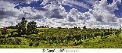 Beautiful landscape bordeaux wineyard france - Beautiful Sun...