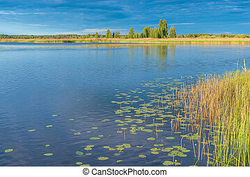beautiful landscape - calm lake with lilies on a sunny day