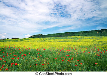 Beautiful Landscape. Field in Crimea. Beautiful landscape with f