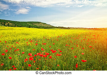 Beautiful Landscape. Field in Crimea.