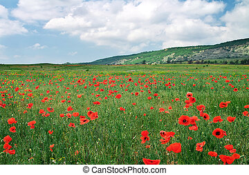 Beautiful Landscape. Field with red poppies. Field in Crimea.