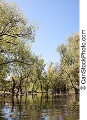 Beautiful landscape from the Danube Delta Biosphere Reserve in Romania