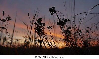 beautiful landscape grass at sunset sunlight - beautiful...