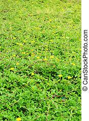 Beautiful landscape - green grass - yellow flowers
