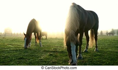 Beautiful landscape horses eating grass on pasture on sun rays background