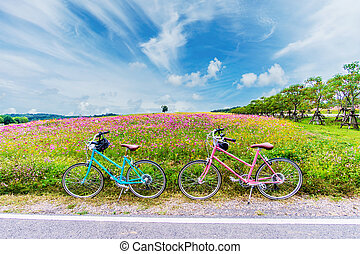 beautiful landscape image with bicycles on cosmos flower field.