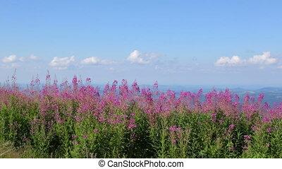 Beautiful landscape in Balkan Mountains