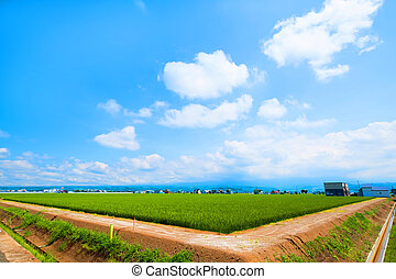beautiful landscape in country