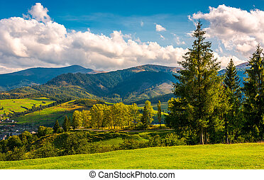 beautiful landscape in mountains. trees on the grassy hills...