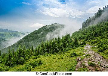 beautiful landscape in the Carpathian mountains