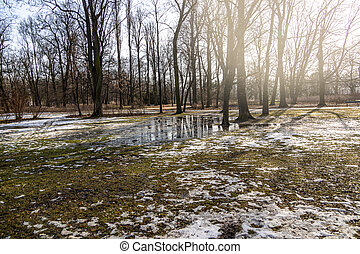 landscape in the park in early spring with melting white snow on a sunny February day