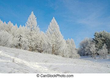 Beautiful landscape in winter forest