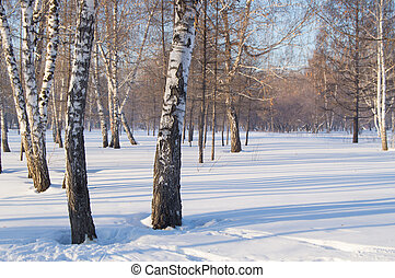 Beautiful landscape in winter Park, the woods. Shadows of trees on snow, copy space