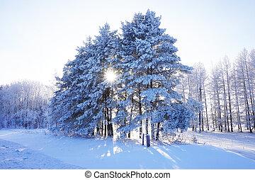 beautiful landscape in winter