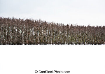 beautiful landscape in winter with trees