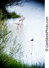 Beautiful landscape of a lagoon with flamingo birds