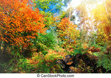 Beautiful landscape of autumn forest