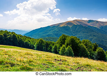 beautiful landscape of Carpathian mountains. forested hills...