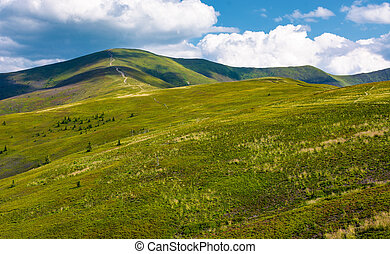 beautiful landscape of Carpathian mountains. grassy hills of...