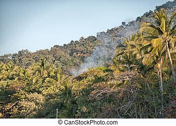 Beautiful landscape of Daintree Park, Queensland - Australia