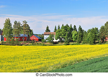 Beautiful landscape of Finland with yellow rape fields in a sunny day