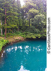 Beautiful landscape of forest lake